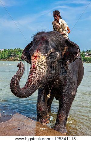 HAMPI, INDIA - OCTOBER 8, 2010: Elephant with unidentified mahouts in river. Hampi, Karnataka, India