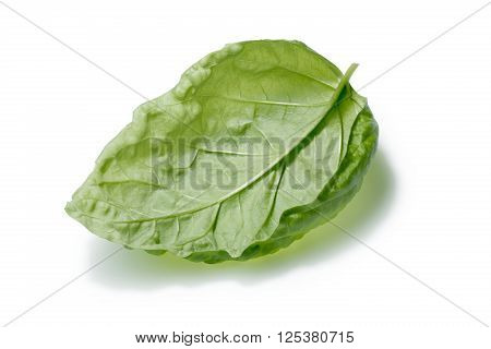 Single Overturned Basil Leaf