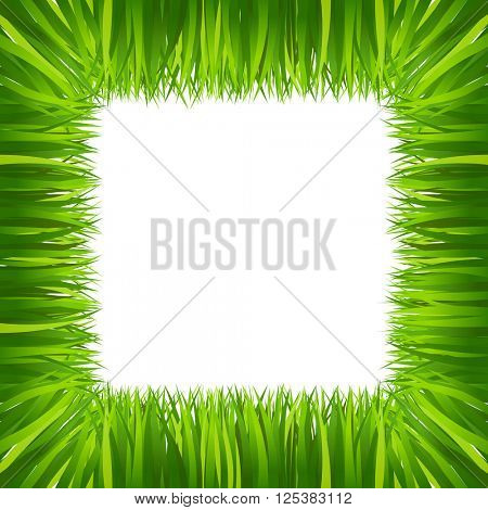 border frame green grass isolated on white 10eps