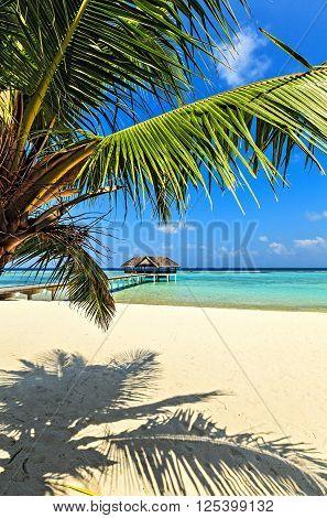 Nice tropical beach Maldives The Indian Ocean