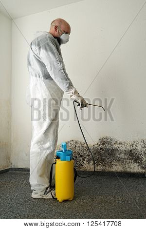 specialist in combating mold in a apartment