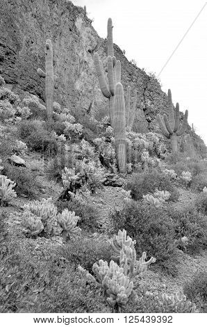 Tonto National Monument is a National Monument in the Superstition Mountains, in Gila County of central Arizona. The area lies on the northeastern edge of the Sonoran Desert ecoregion, an arid habitat