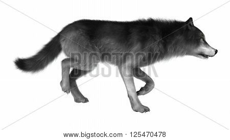3D Illustration Gray Wolf On White