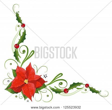 Colorful poinsettia, holly tendril with berries, vector decoration.