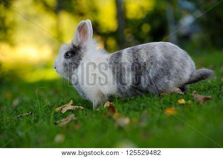 Cute Rabbit On Green Grass