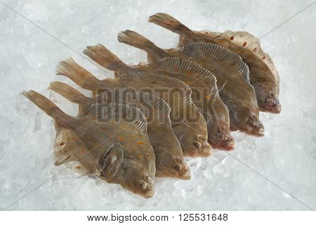 Fresh raw European plaice fishes on ice