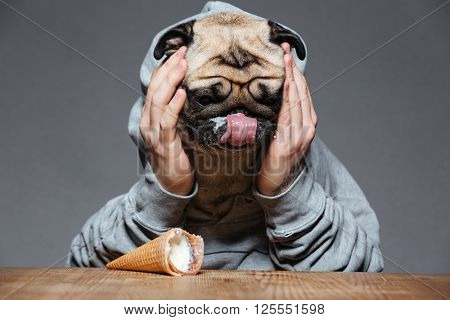 Sad upset man with pug dog head droped down ice-cream on the table over grey background