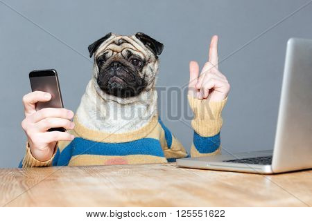 Cute pug dog with man hands in striped sweater using mobile phone and pointing up over grey background