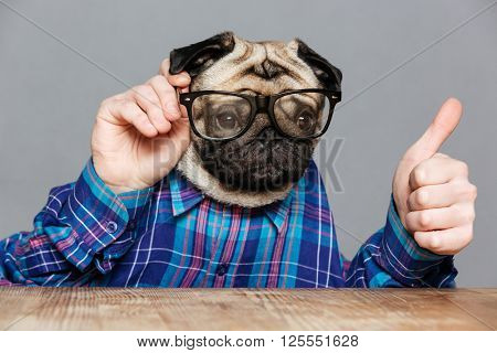 Amusing man with pug dog head in checkered shirt and glasses and showing thumbs up over grey background