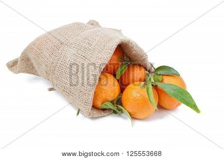 the mandarins in the sack isolated on white
