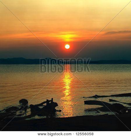 beauty sundown seascape with dark snags on coast foreground