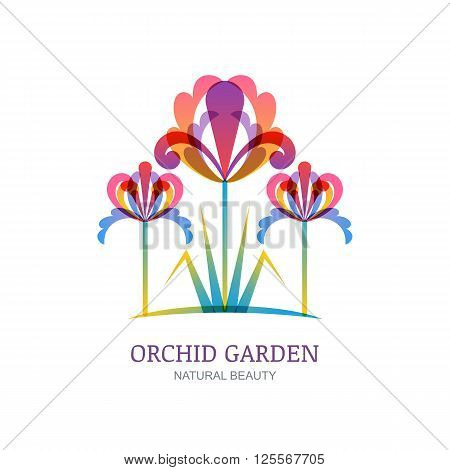 Vector isolated illustration of colorful tropic orchid or lily flowers. Logo label icon design elements. Concept for beauty salon natural organic cosmetics makeup floral shop gardening.