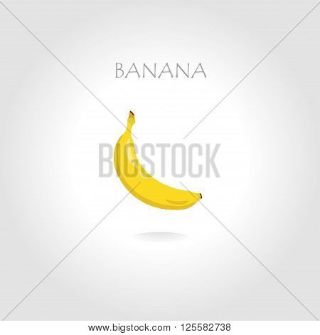 fresh banana vector illustration with text tittle in the sunlight abstract
