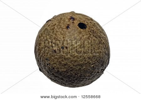 Marble Gall