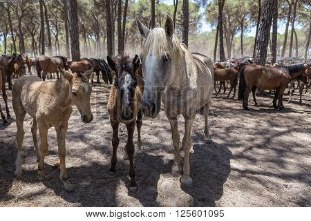Family of horses communicate in the corral. Cubs horses and parents.
