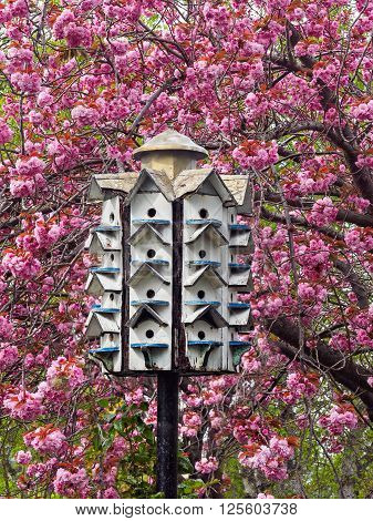 Birdhouse on the pole amidst blossoming cherry trees