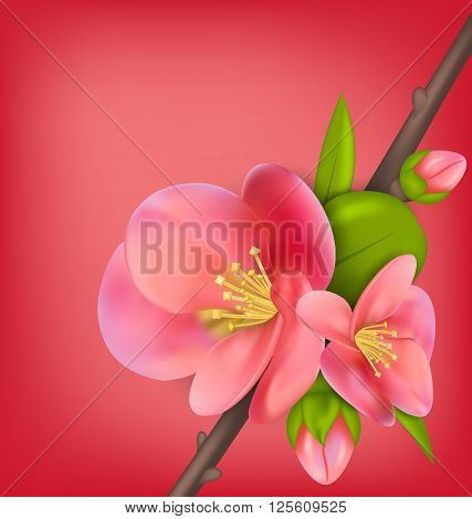 Illustration Branch with Buds of Japanese Quince Chaenomeles japonica in Bloom, Springtime Awakening. Copy Space for Your Text - Vector