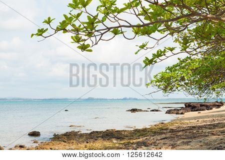 The tree and reef at the seaside of island in thailand