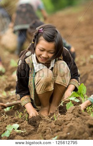 Chiang Mai province , Thailand,- 2005: On the mountainside children of the Hmong ethnic group, have fun planting cabbage, before the monsoon.