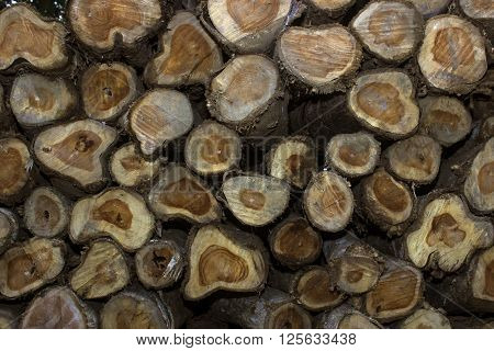 In botany, trunk (or bole) refers to the main wooden axis of a tree