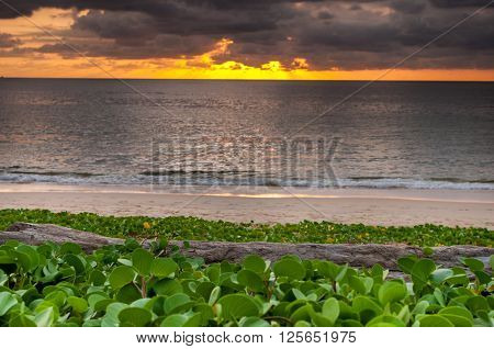 Sunset with log wood on the beach wiht beach morning glory at Naiyang beach Phuket Thailand ** Note: Shallow depth of field
