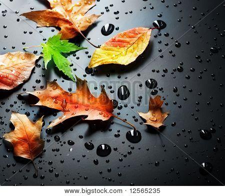 Herbst über schwarz