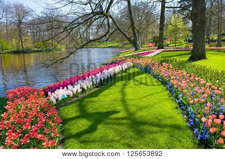 The Keukenhof is a popular flower garden which is visited by a million tourists from all around the world. It is open for only six weeks every year.