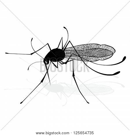 Insect a realistic gnat mosquito. Mosquito silhouette. Mosquito isolated on white background. Vector sketch illustration