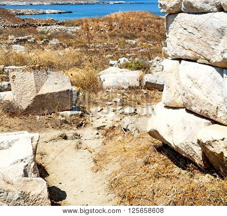 Bush   In Delos Greece The Historycal Acropolis And Old Ruin Site