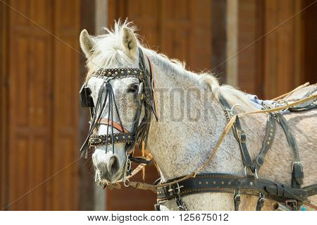 Portrait of a horse at a ranch wearing halters and blinder.