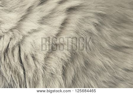 Grey Cat Fur Background Texture Close up