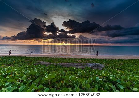 Beach morning glory on the beach and log wood with people at sunset time in Nai yang beach Phuket Thailand