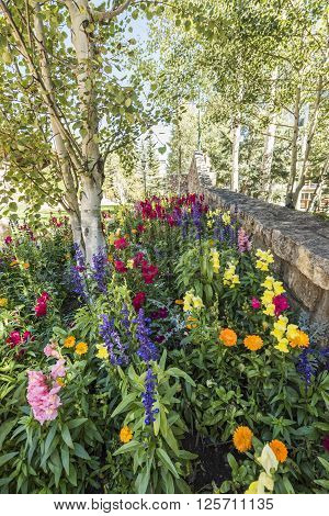 Flower bed near Aspen Trees in Vail, Colorado ** Note: Soft Focus at 100%, best at smaller sizes
