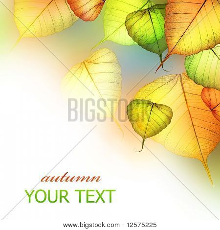 Autumn Leaves.Beautiful Abstract Fall Border poster
