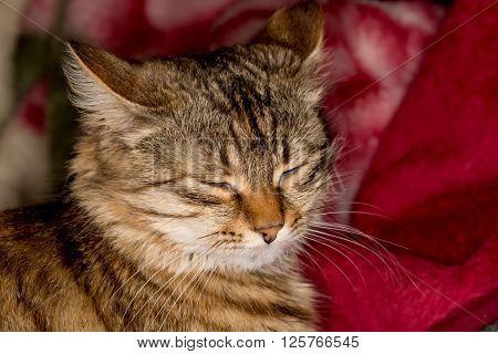 Sleeping fanny cat soft photo