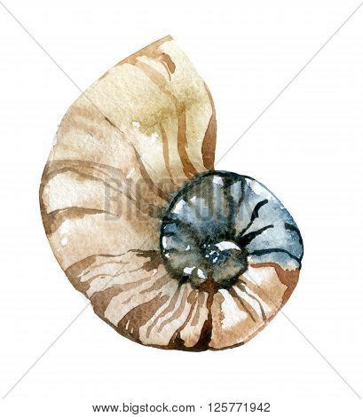 Hand paint watercolor seashell. Nautilus raster illustration