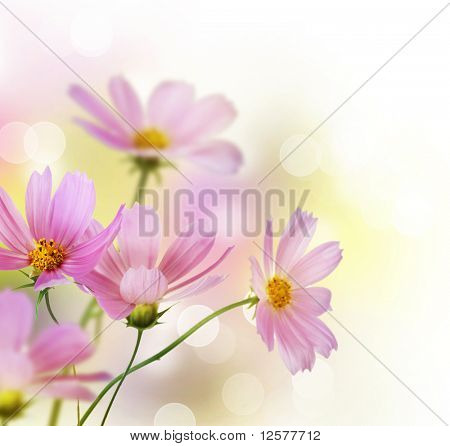 Schöne Blumen-Border.Floral-design