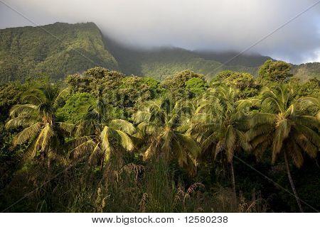 Rainforest, Dominica