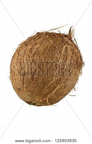 Close up of whole coconut with cliping path, Full sharp picure of brown natural coconut