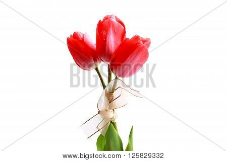 Pink tulip bouquet on a white background