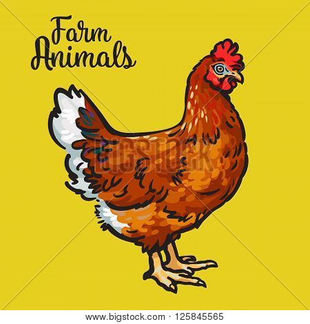 One red colored feathered chicken, sketch style hand-drawn, vector on a yellow background