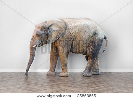 an elephant  in the room near white wall. Creative concept