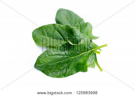 A bunch of fresh spinach isolated on white