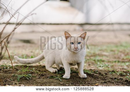 Stray squint cat standing on grass and looking at camera, copy space