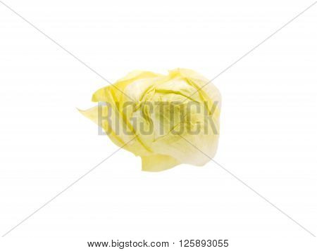 chinese cabbage isolated on a white background