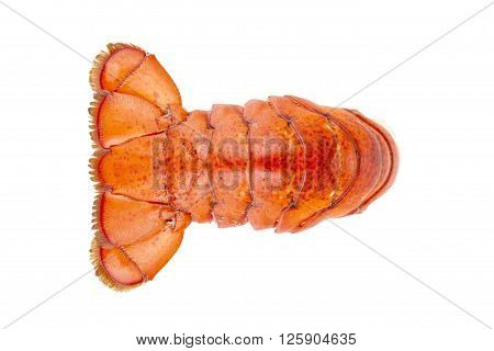 Image of lobster tail isolated on white background