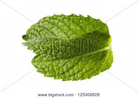 organic herbs fresh mint leaf isolated on white background
