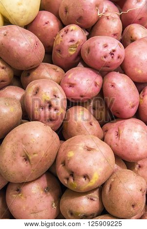 Red Potatoes From Market Shelves Real With Flaws And Bruises