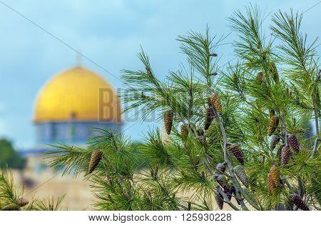Pine Tree And Blurred Al-aqsa Mosque