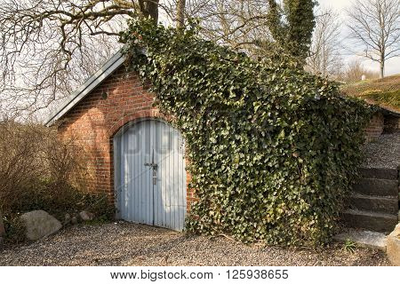 Small barn with ivy on the wall